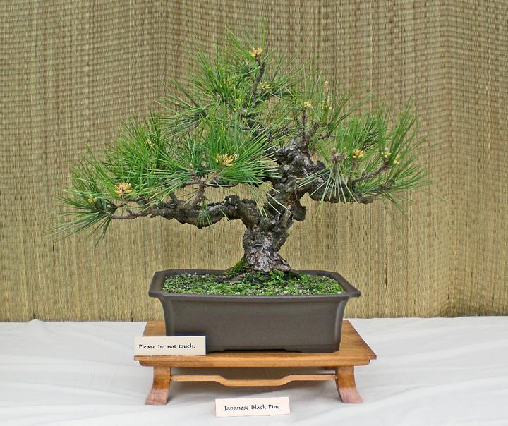 bonsai tree kit instructions